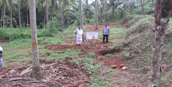 moisture conservation in coconut gardens