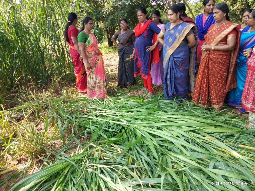 Training on fodder production