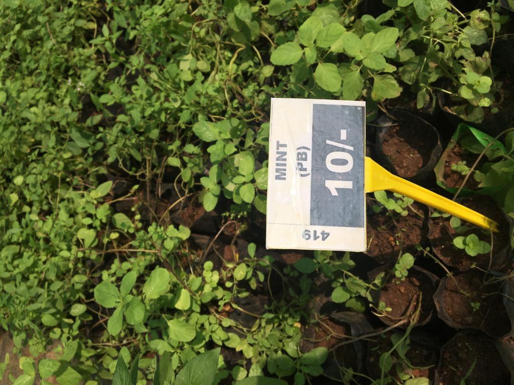 Plants & Seedlings for Sale | Kerala Agricultural University