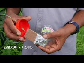 Embedded thumbnail for മാവിലെ  കായീച്ച നിയന്ത്രണം ഫിറമോൺ കെണി  pheromone trap for mango fruit fly control