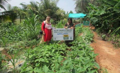 precision farming techniques in open vegetable cultivation