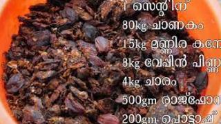 Embedded thumbnail for മഞ്ഞൾ കൃഷി( Turmeric cultivation)
