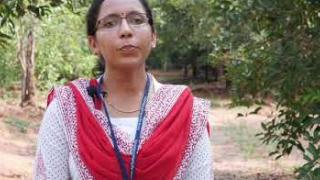 Embedded thumbnail for Yam cultivation  കാച്ചിൽ കൃഷി