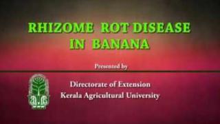Embedded thumbnail for Rhizome rot in banana