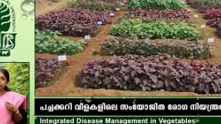 Embedded thumbnail for IDM in vegetables