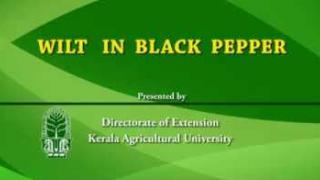Embedded thumbnail for Wilt in pepper