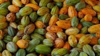 Embedded thumbnail for കൊക്കോ  ഗവേഷണ  കേന്ദ്രം , വെള്ളാനിക്കര(Cocoa Research Station, Vellanikkara