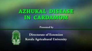 Embedded thumbnail for Azhukal Disease in cardamom