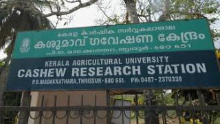 Embedded thumbnail for Cashew Research Station , Madakkathara (കശുമാവ്  ഗവേഷണ  കേന്ദ്രം , മാടക്കത്തറ )
