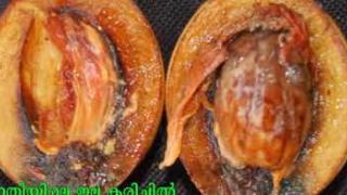Embedded thumbnail for Leaf Fall in Nutmeg test